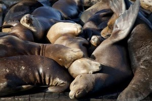 sleeping seals