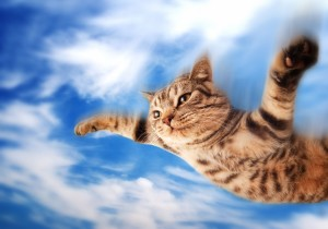 flying cat why I wrote