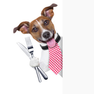 dog with eating utensils